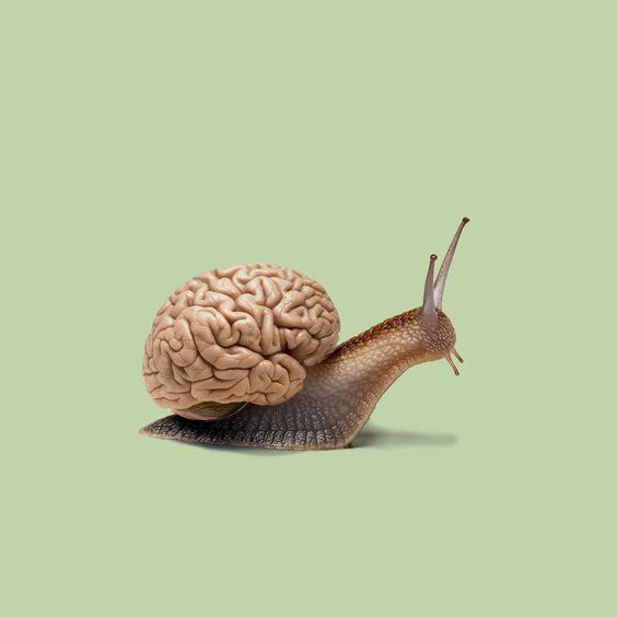 Photo d'un escargot : au lieu de sa coquille, il transporte un cerveau.
